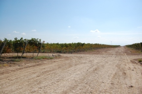 Intersection of two of the dirt roads that intersect the vineyard
